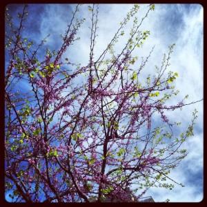 Primavera Instagram