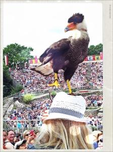 Un Caracara común sobre el sombrero de mi hermana en el Puy du fou
