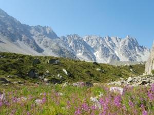 Montagne fleurs